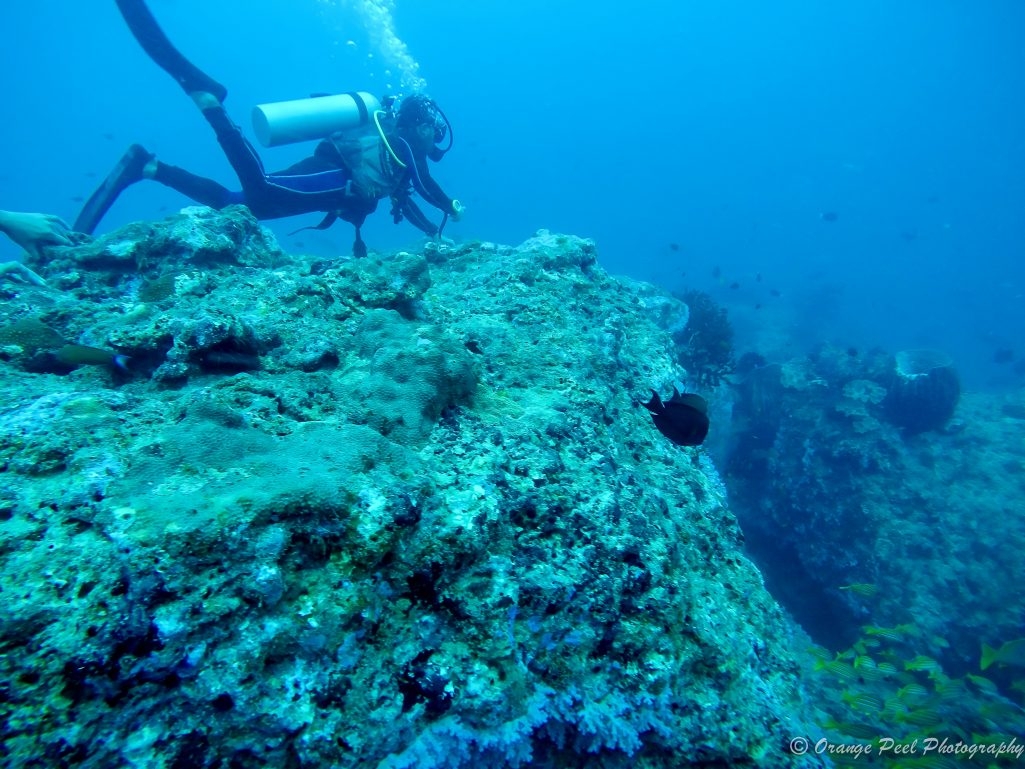 grazing the top of reefs in Andaman